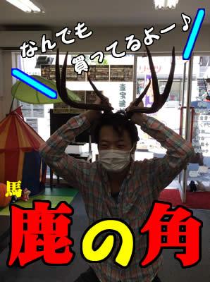 鹿の角買取ります。大吉京都西院店