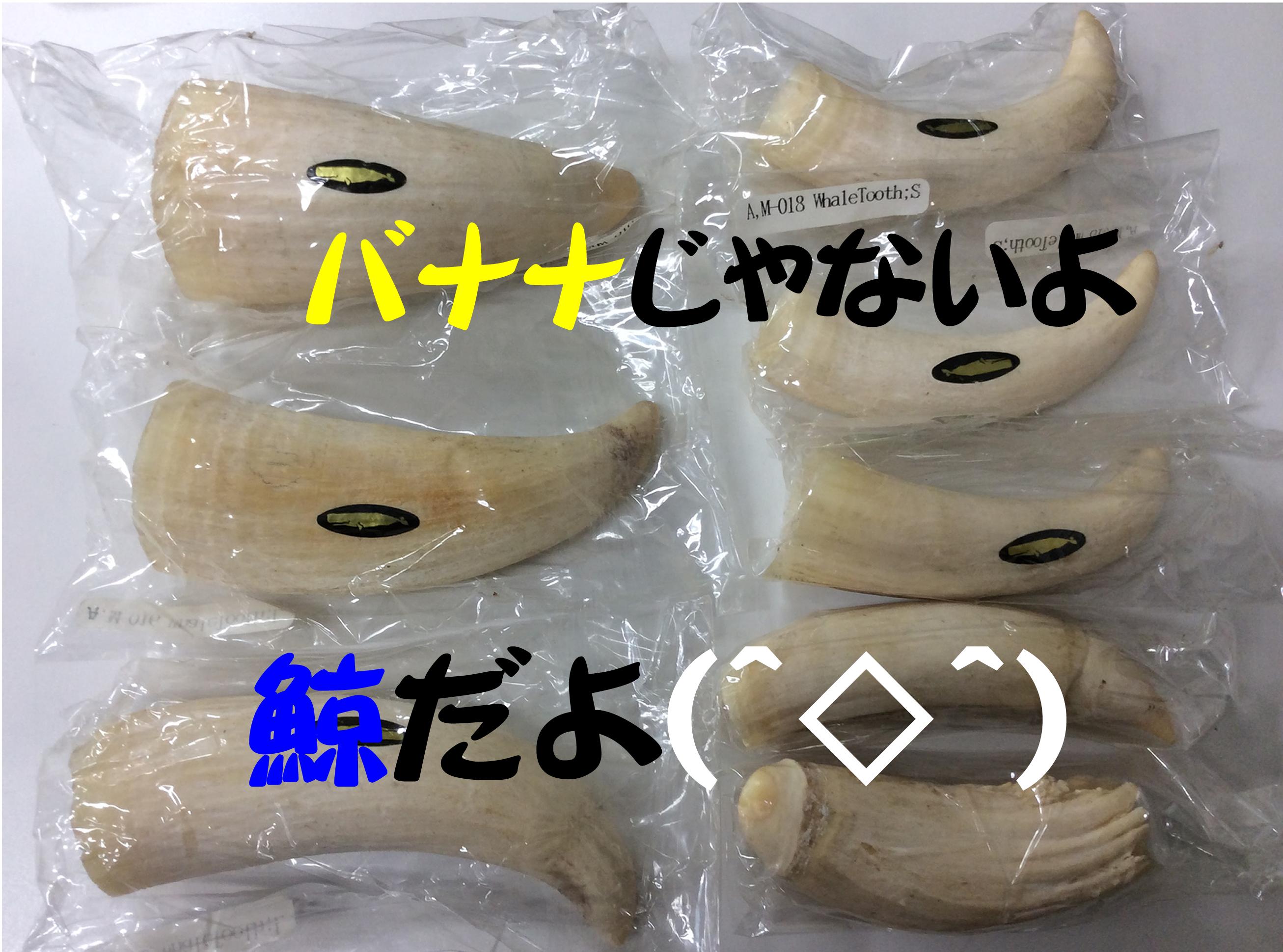 鯨歯、買取りました(*'ω'*) 買取専門店大吉京都西院店