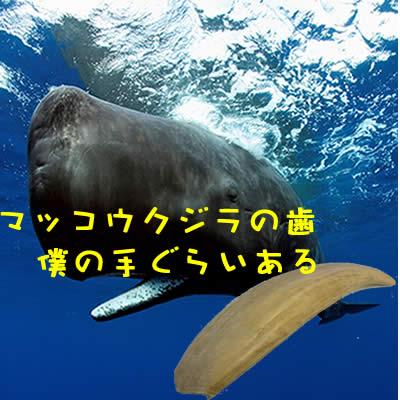 クジラの歯 買取 長岡
